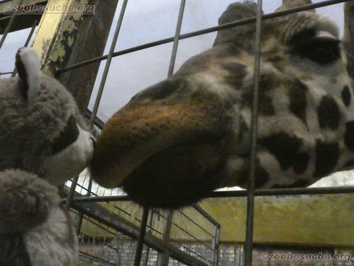 Wuschel mit Giraffe  (5)
