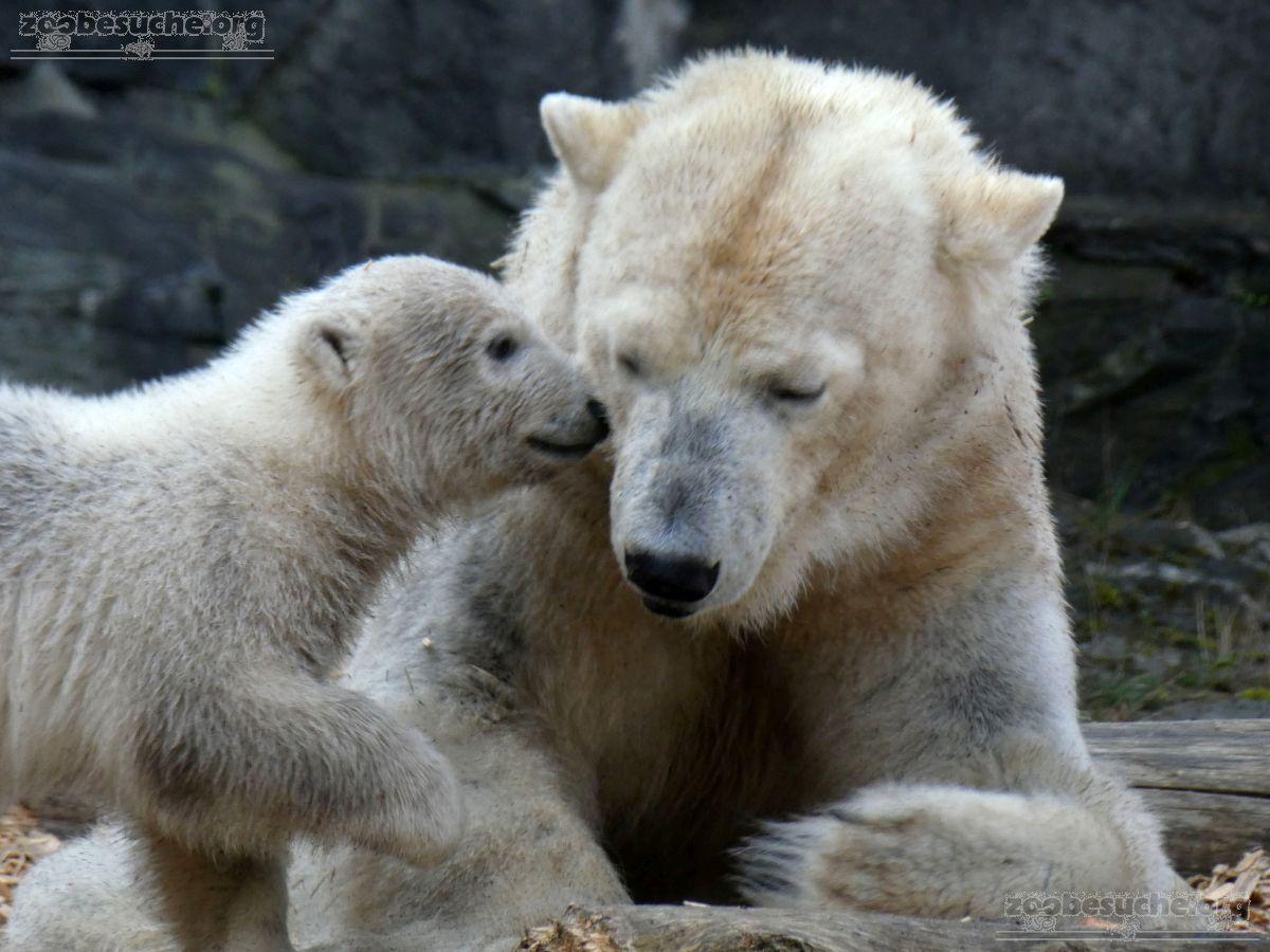 Eisbär  (47)
