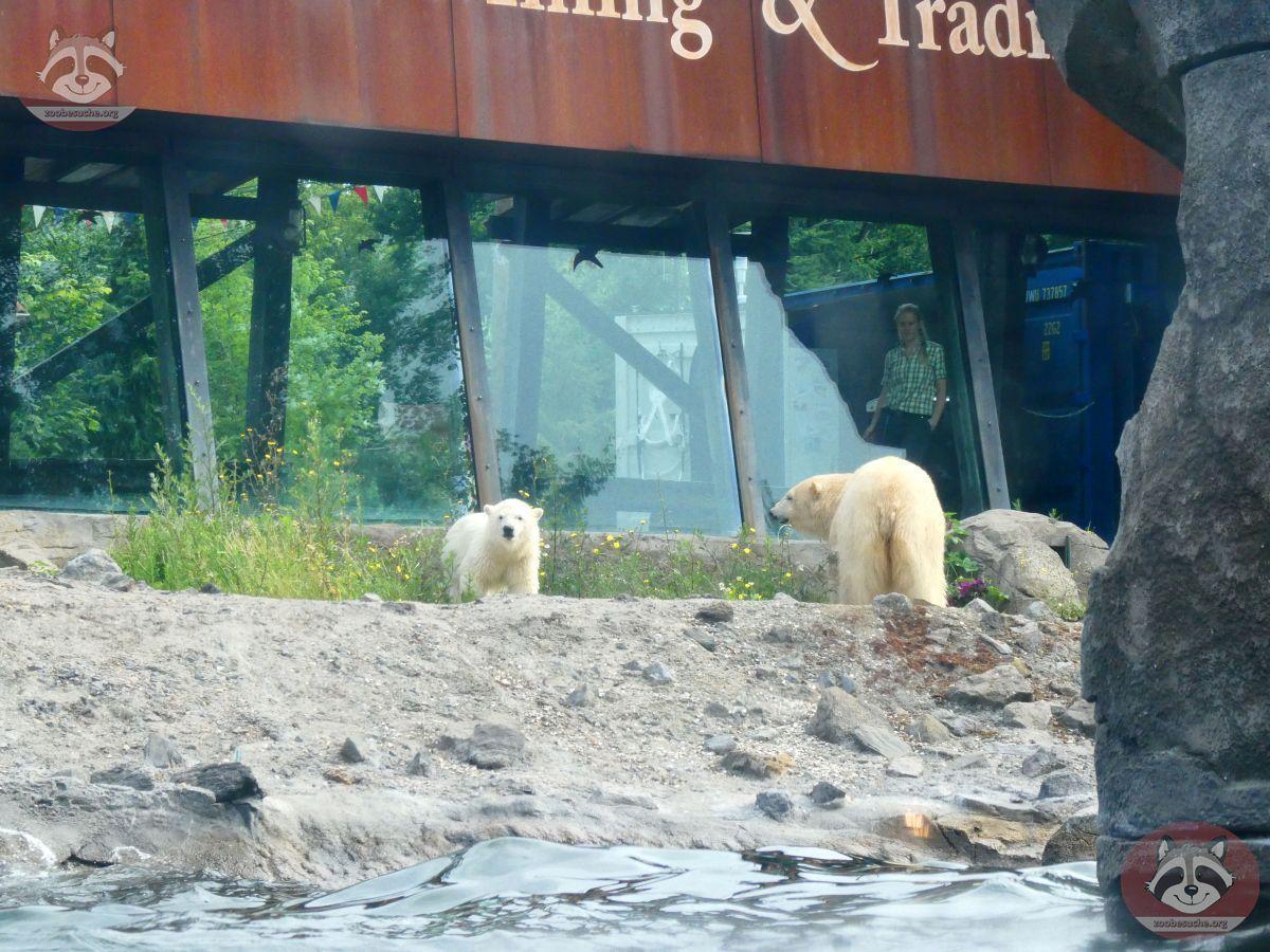 Eisbären_Nana_und_Milana_(1)