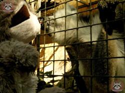 Katta mit Wuschel (3)