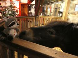 Wuschel mit Pony Bruno