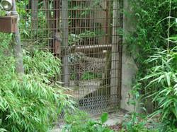 Leopard  (12)