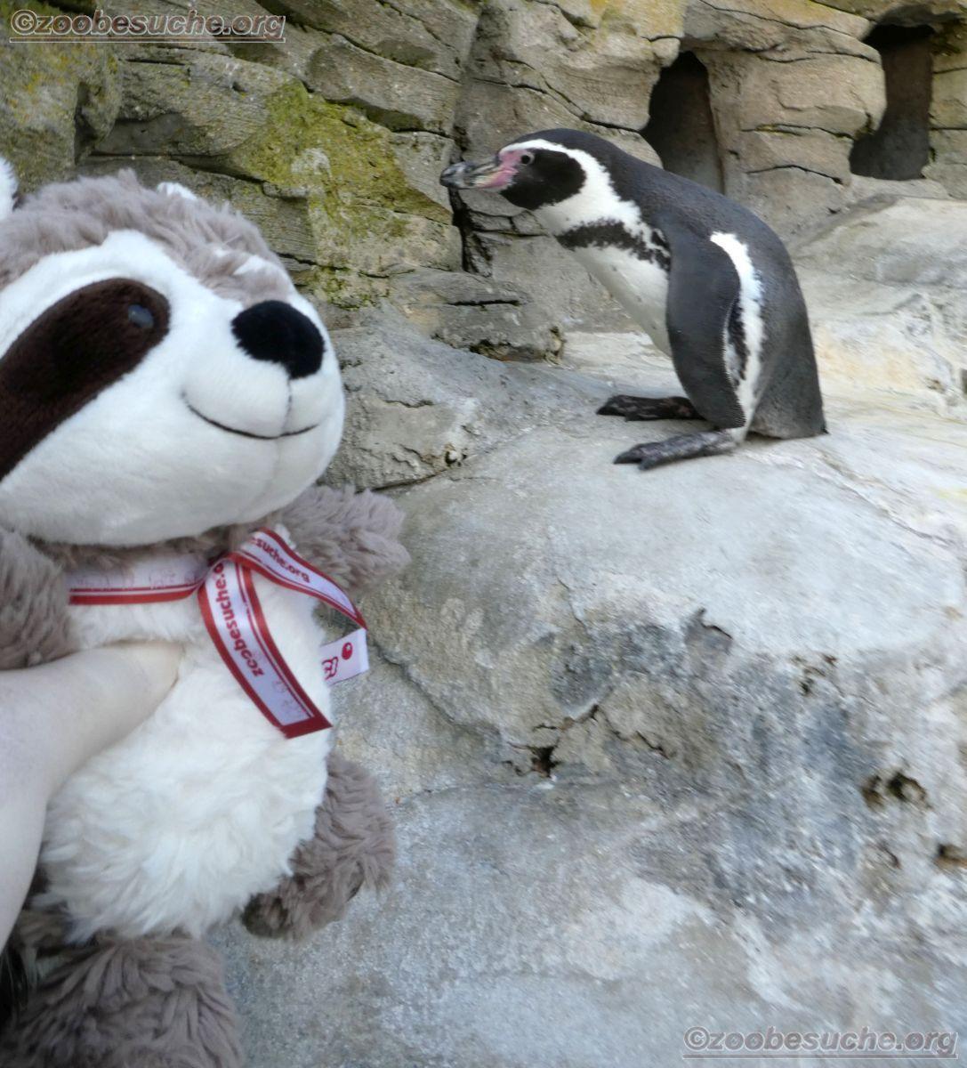 Pinguin mit Wuschel  (1)
