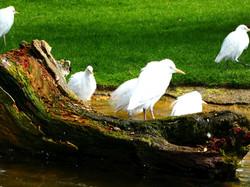 Vögel (3)
