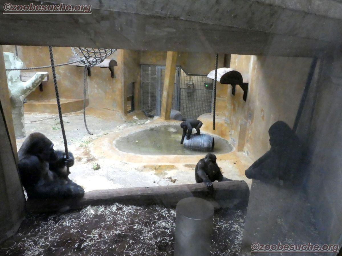 Gorillas (3)