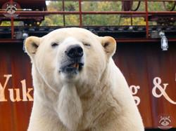 Eisbär Sprinter (4)