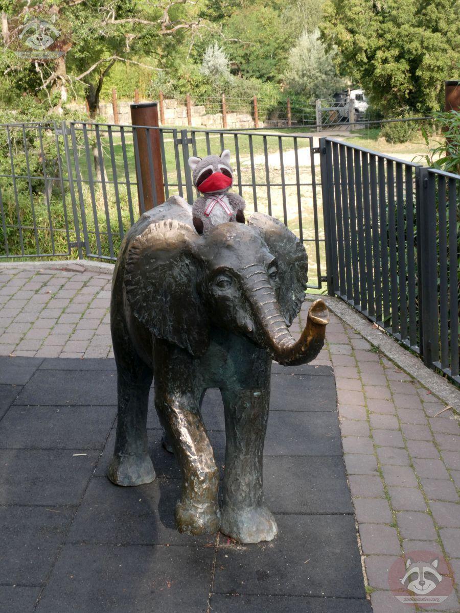 Wuschel auf Elefant