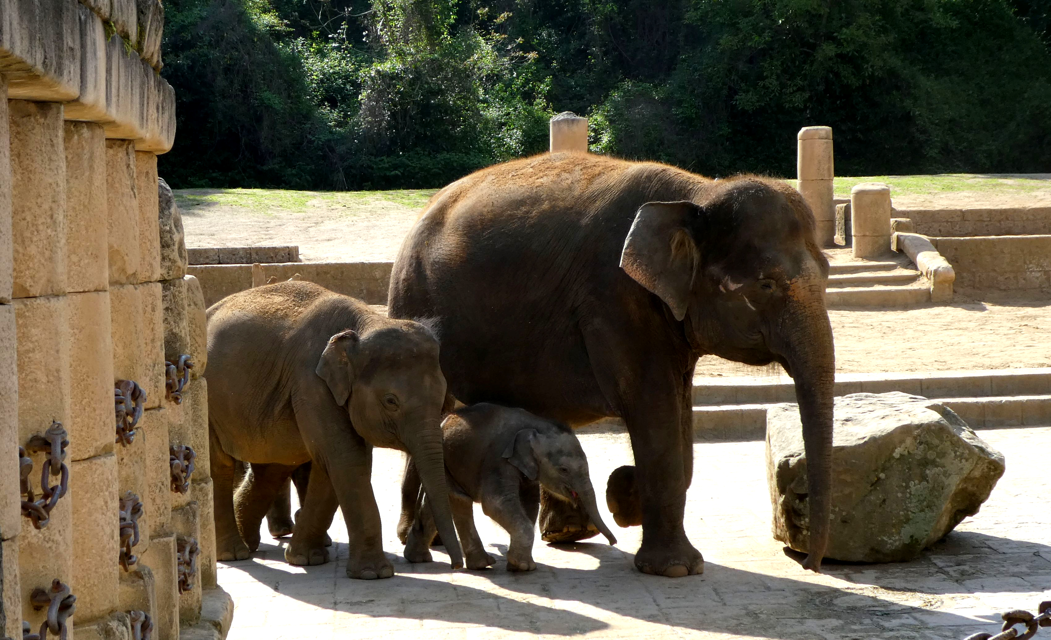 Elefanten  (4)