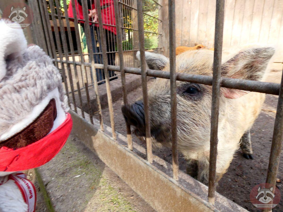Maskenschwein mit Wuschel