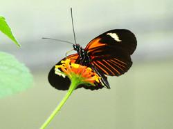 Schmetterling  (14)