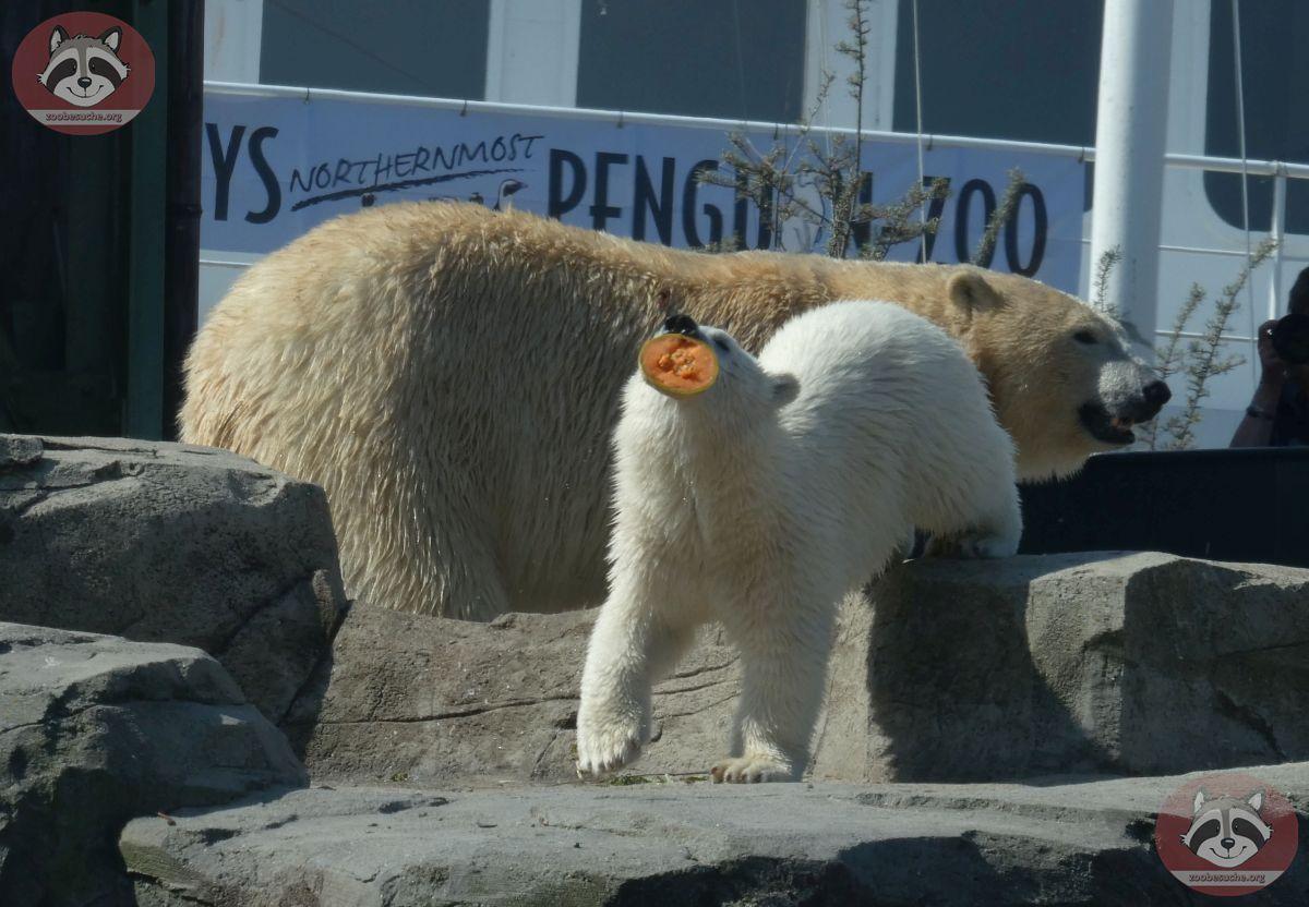 Eisbären_Milana_und_Nana_(18)