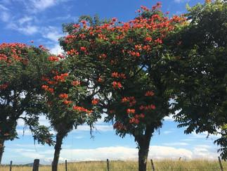 Morro do Jacu em Araquari/SC, conhece?