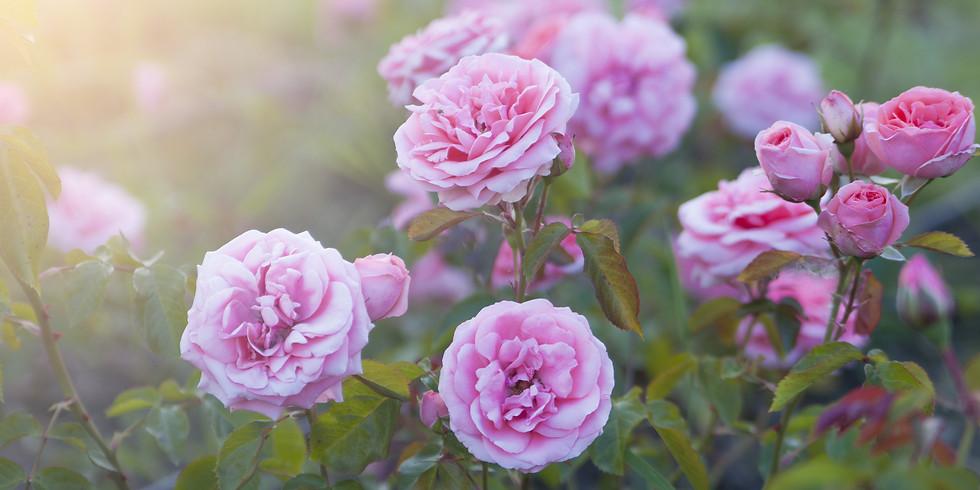 SisterHood of the Rose ~ Retreat Day