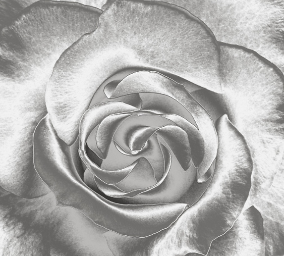silver rose.png