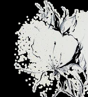 Jasmine%2520flower_edited_edited.png