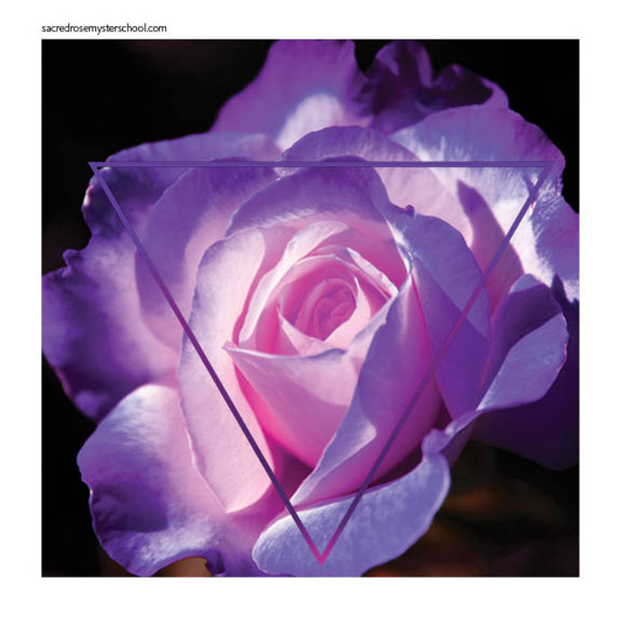 Violet Rose Glyph.jpg
