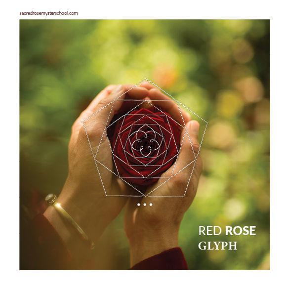RED ROSE Glyph|1.jpg