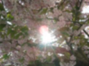 2014-04-18 16.10.34.jpg