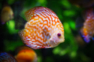 Aquarium - Val de Roland.jpg
