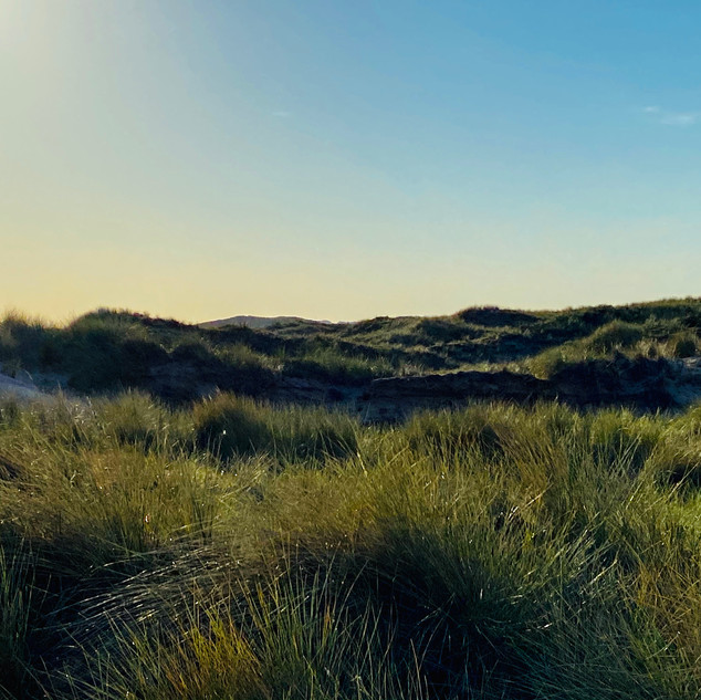The Dutch Dunes