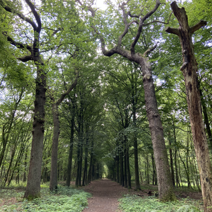 Dutch forest