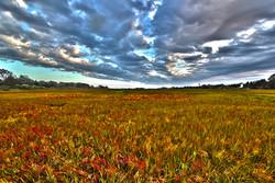 remsenburg fall wetlands