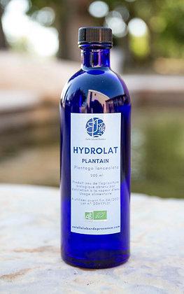 Hydrolat de plantain
