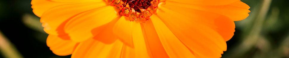 Flores-9_edited.jpg