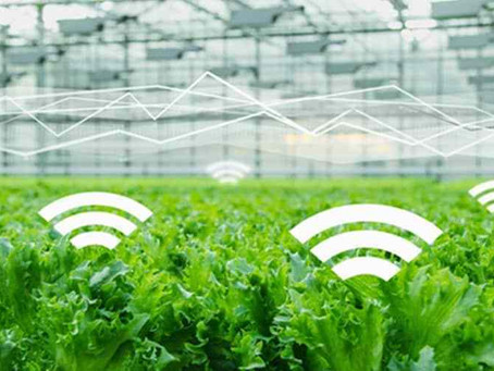 Top 5 Considerations for IoT Sensors in Farming