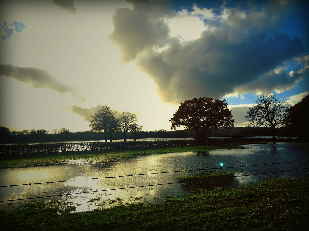 Mid November after a rain storm