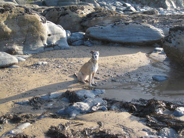 Lots of dog-friendly beaches