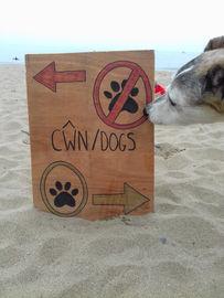Dog Friendly Beaches!