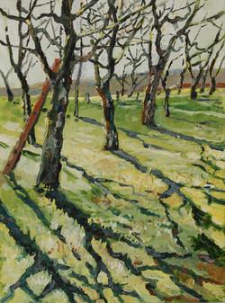 Kirschbäume bei Goppeln 2006