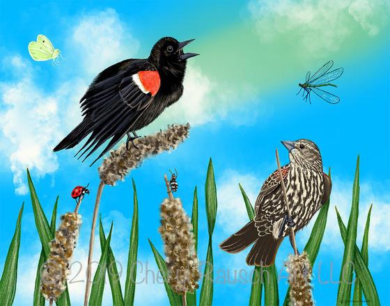 Red-winged Blackbirds II