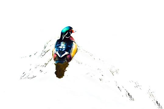 Wood Duckie.jpg