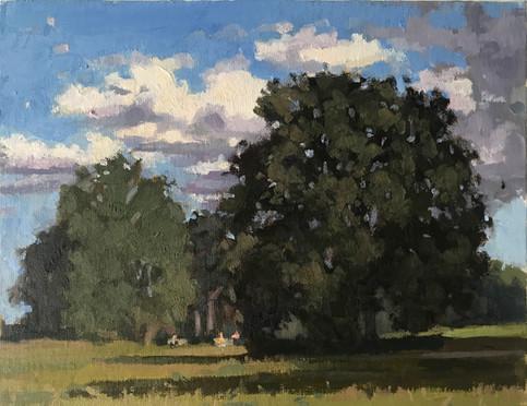Hampstead Heath Large trees