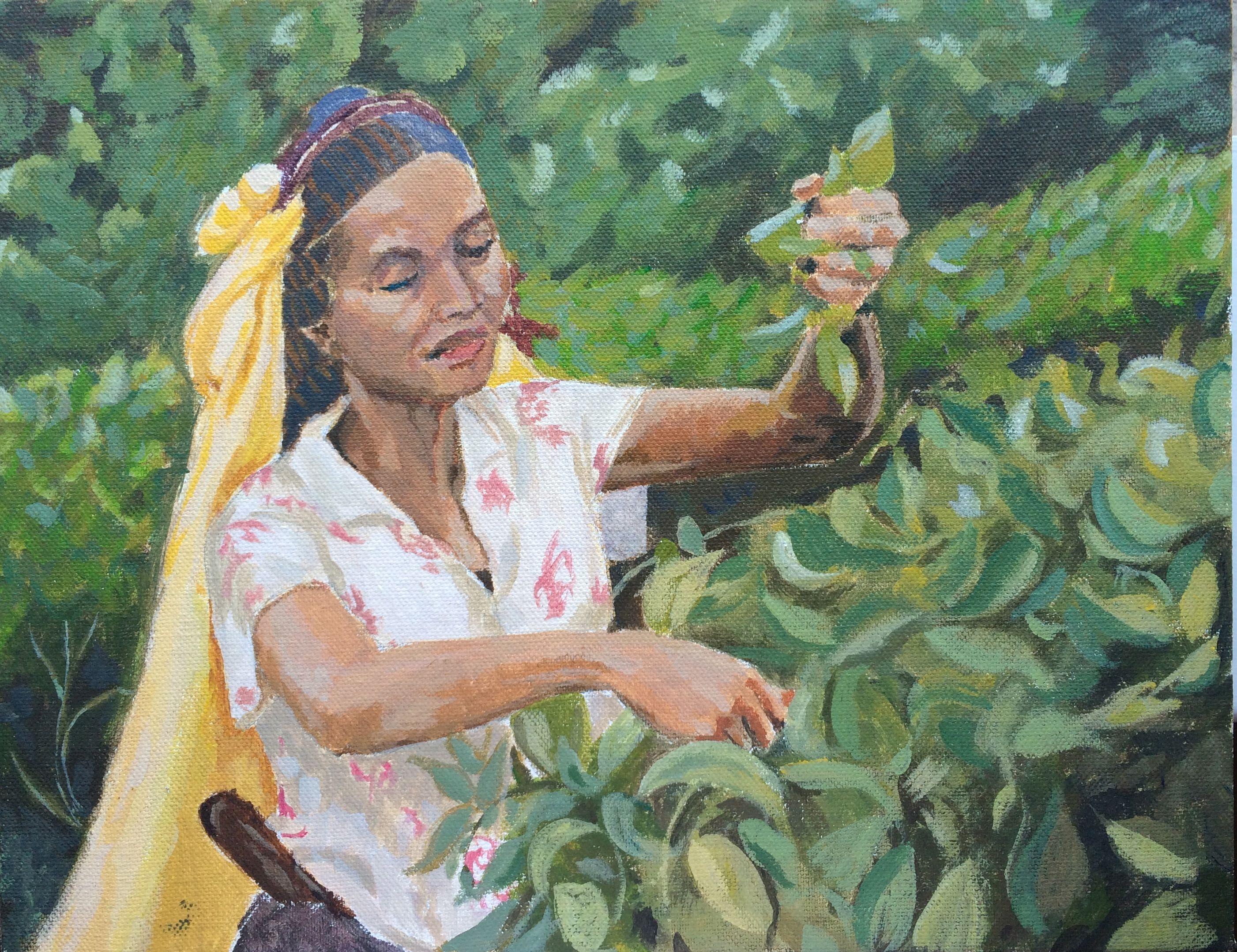 Tea Picking in Darjeeling Original