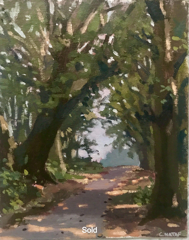 Hampstead Heath Trees