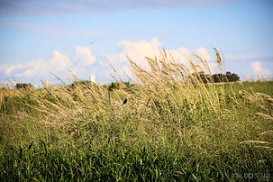 Fotografia profissional, paisagem, passaro, bird, landscape