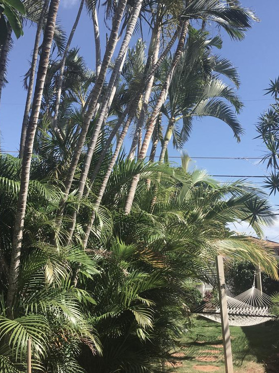Hammock & Palms