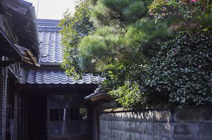 Fujii b 07.jpg