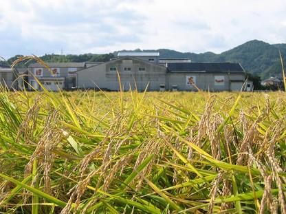 Azumaichi (3).jpg