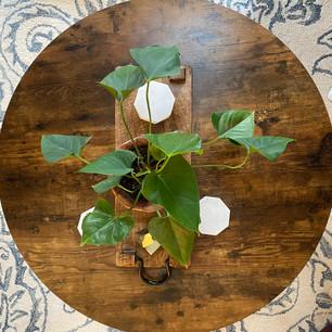 Healthy Living: Houseplants