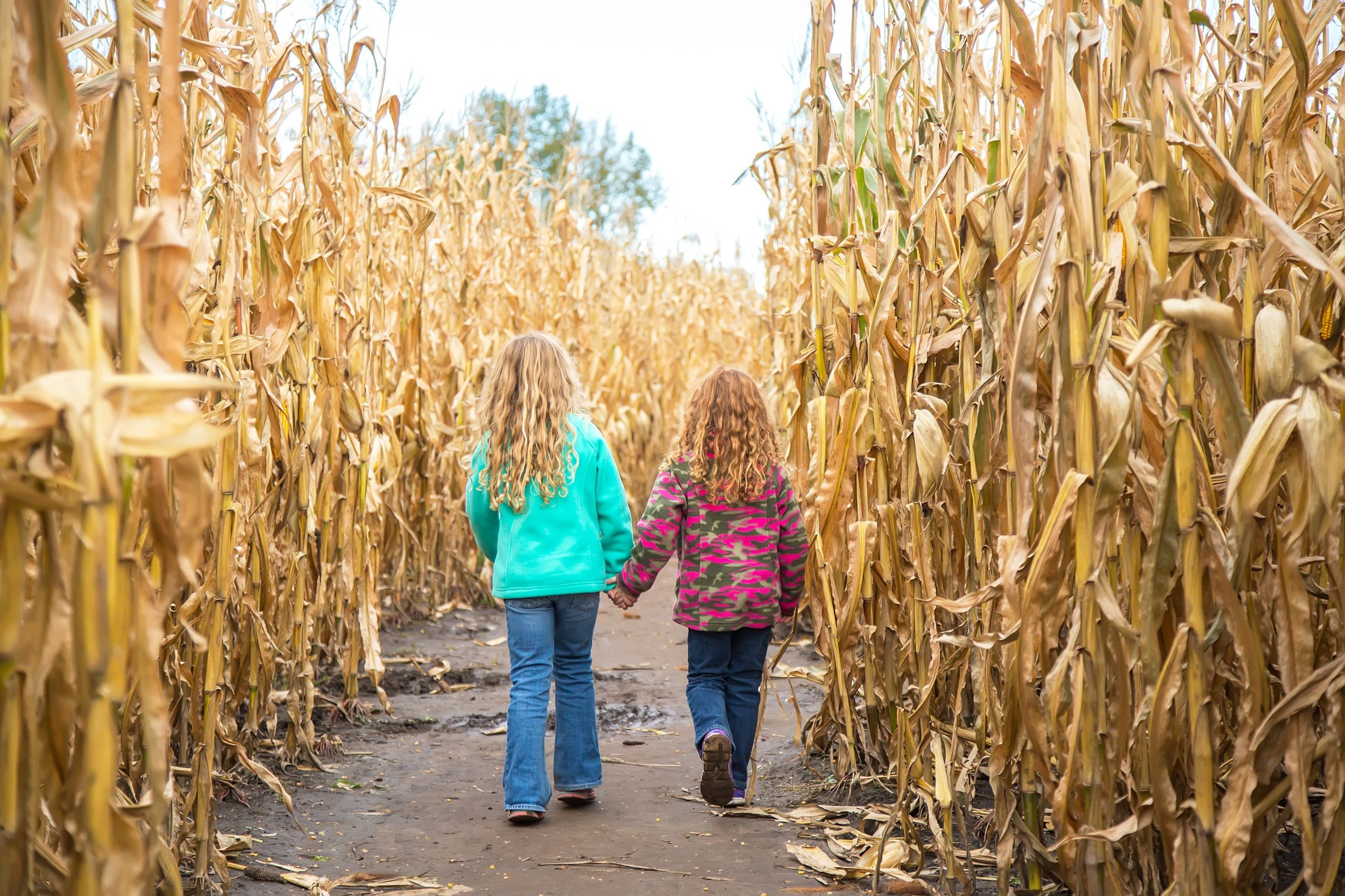 Corn Maze Large Scale Art Camp