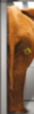 Progetto grafico per porta scorrevole by fuorirottadesign