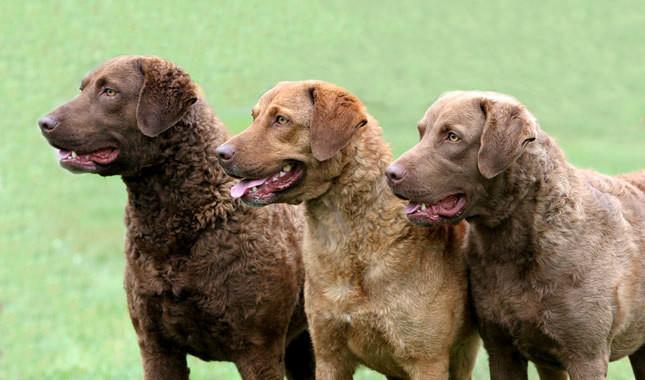 Brown, Sedge, Deadgrass