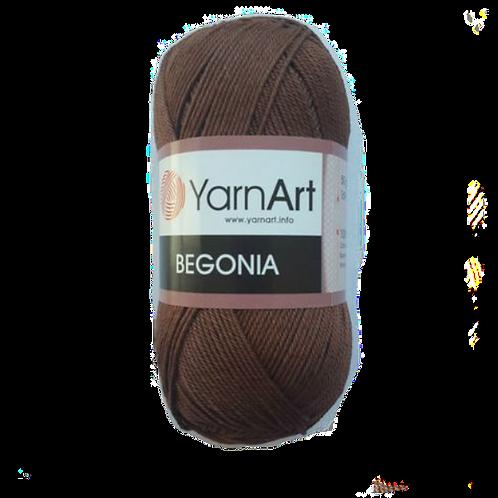 Begonia 77