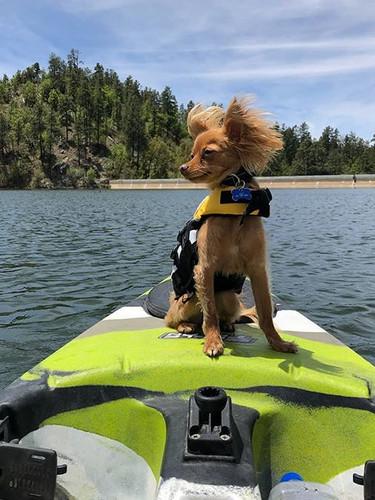 Dog Friendly Kayaking Prescott Arizona.j