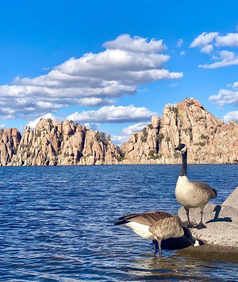 Geese at Watson Lake