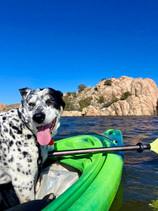 Dog Friendly Kayaking!